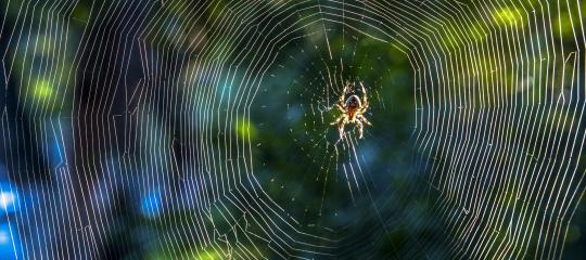Spin-in-web iStock-517572088.jpg