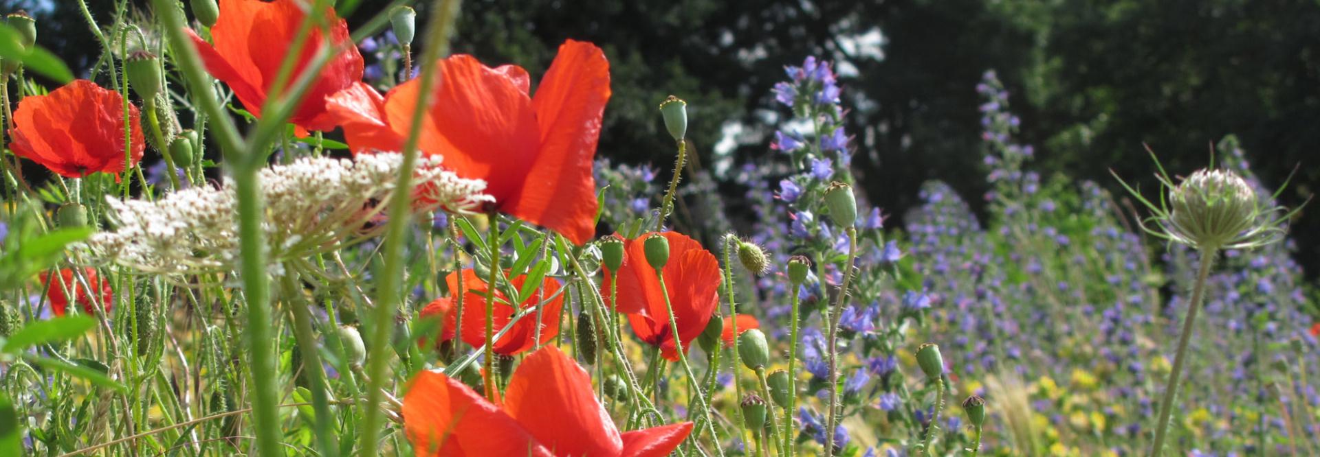 Bloemen plukken_ronduit.jpg