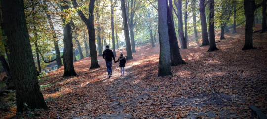 autumn-1204603_1920.jpg