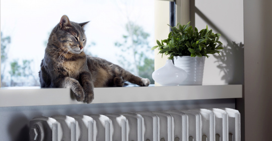 Kat slapend boven verwarming.jpg